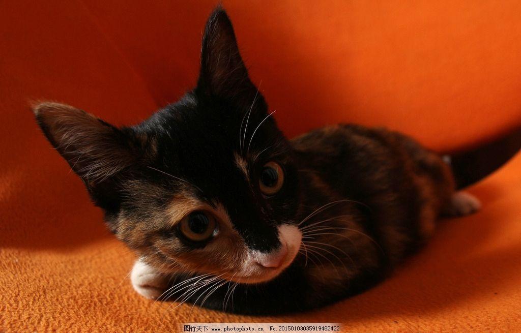 可爱 猫咪 萌 专注的眼神 黑色 橙色 白色 黄色 抱手 爬起睡觉 动物
