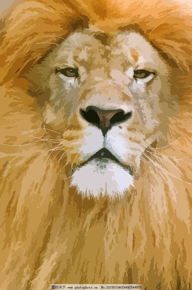 狮子 草原之王 哺乳动物 猫科动物 食肉动物 手绘生物世界