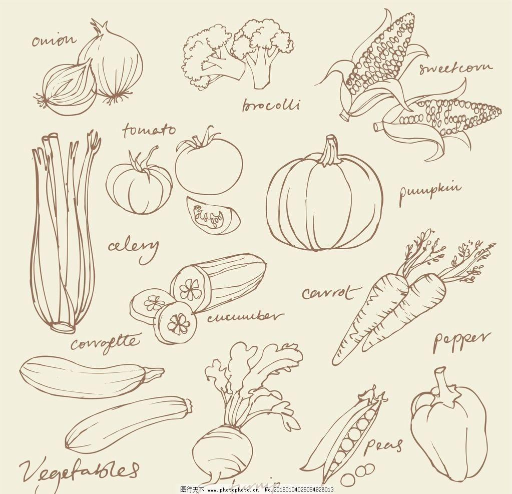 蔬菜 描边 勾线 简笔画 少儿绘画 教学 蔬菜简笔 南瓜 玉米