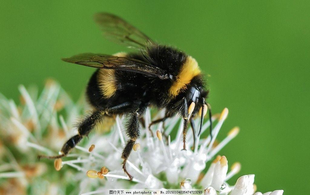 昆虫类的动物图片