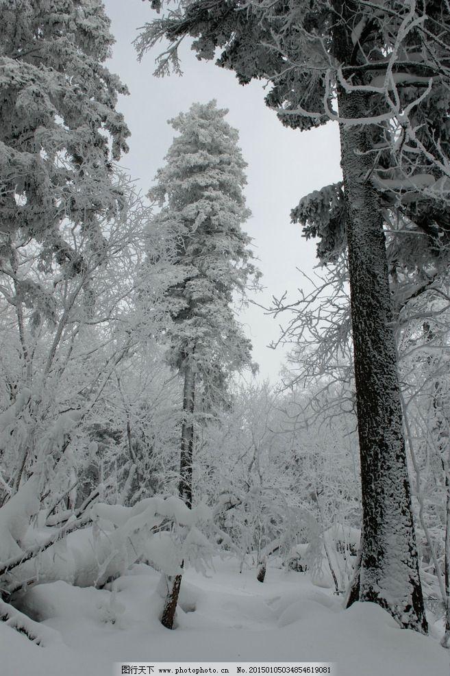 冬季森林雪景图片