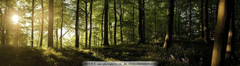 晨光 森林 全景 树木 树林 摄影 摄影 自然景观 自然风景 96dpi jpg