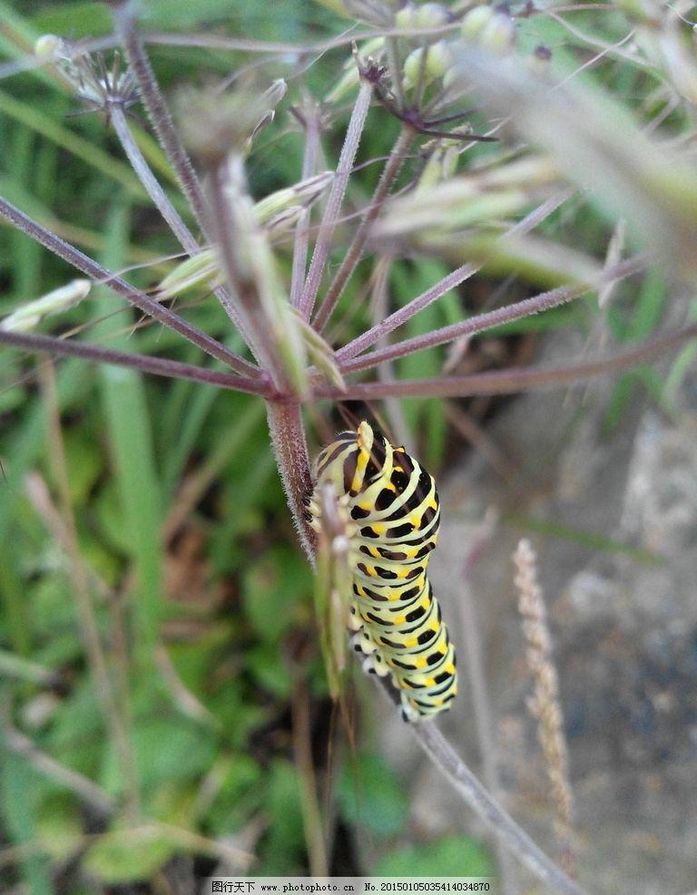 植物昆虫简笔画