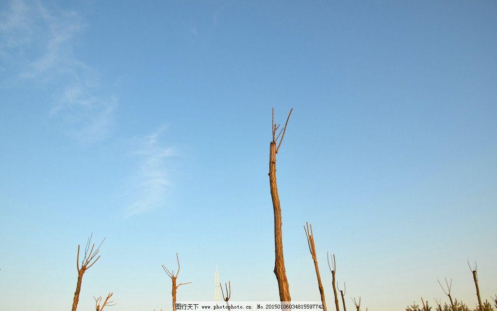 树木 树林 蓝天 天空 郊野风光 风景记忆 摄影 自然景观 自然风景 300
