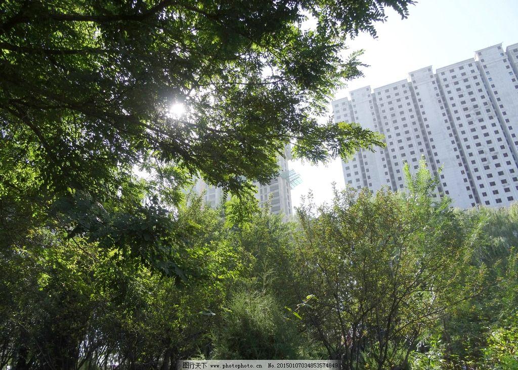 树荫图片,树林 树丛 绿化 植物 楼房 城市 光斑-图行