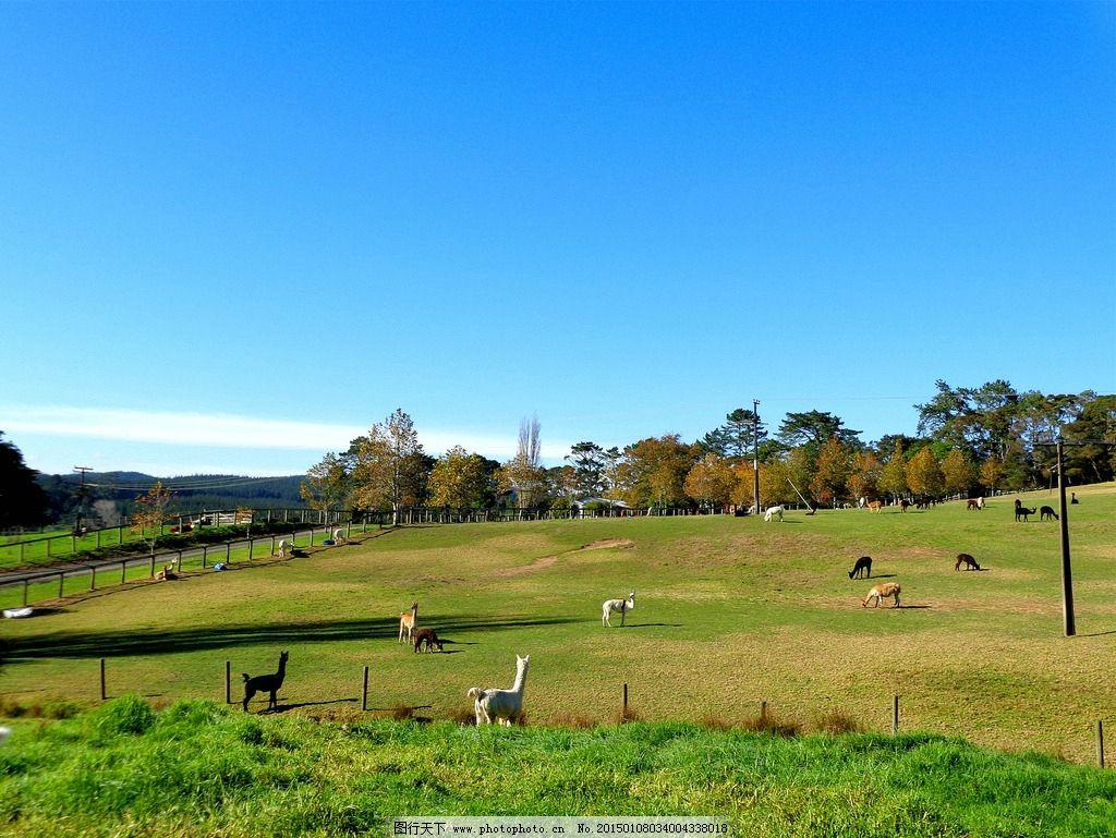 新西兰牧场风景图片