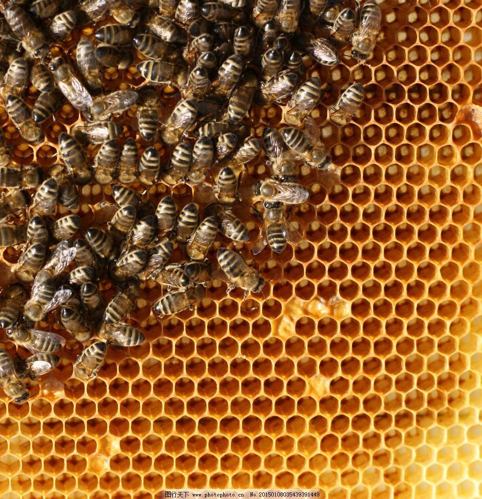蜂巢蜜蜂 唯美 昆虫 益虫 蜂窝 筑巢 蜂房 摄影 生物世界