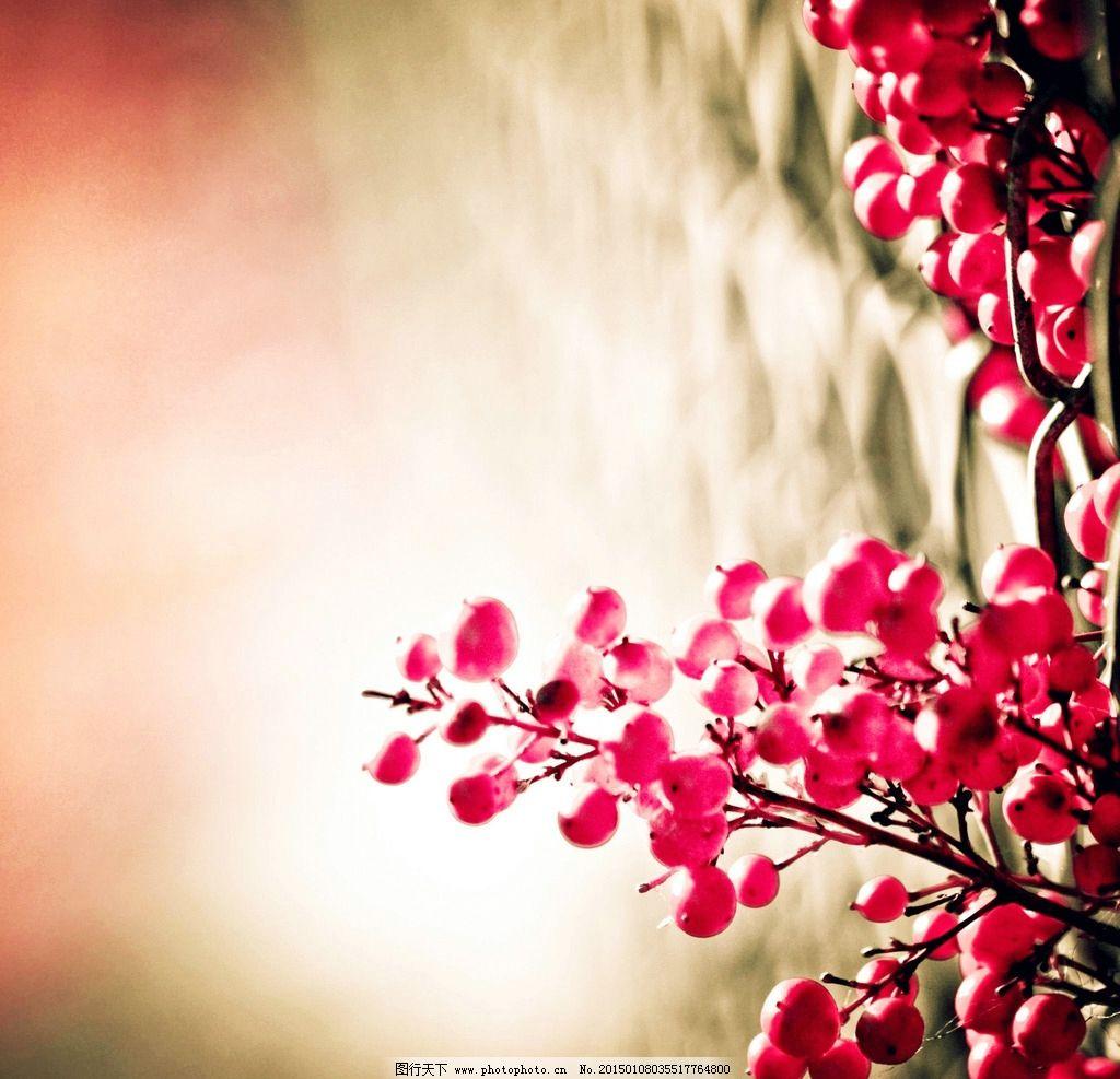 唯美樱桃图片