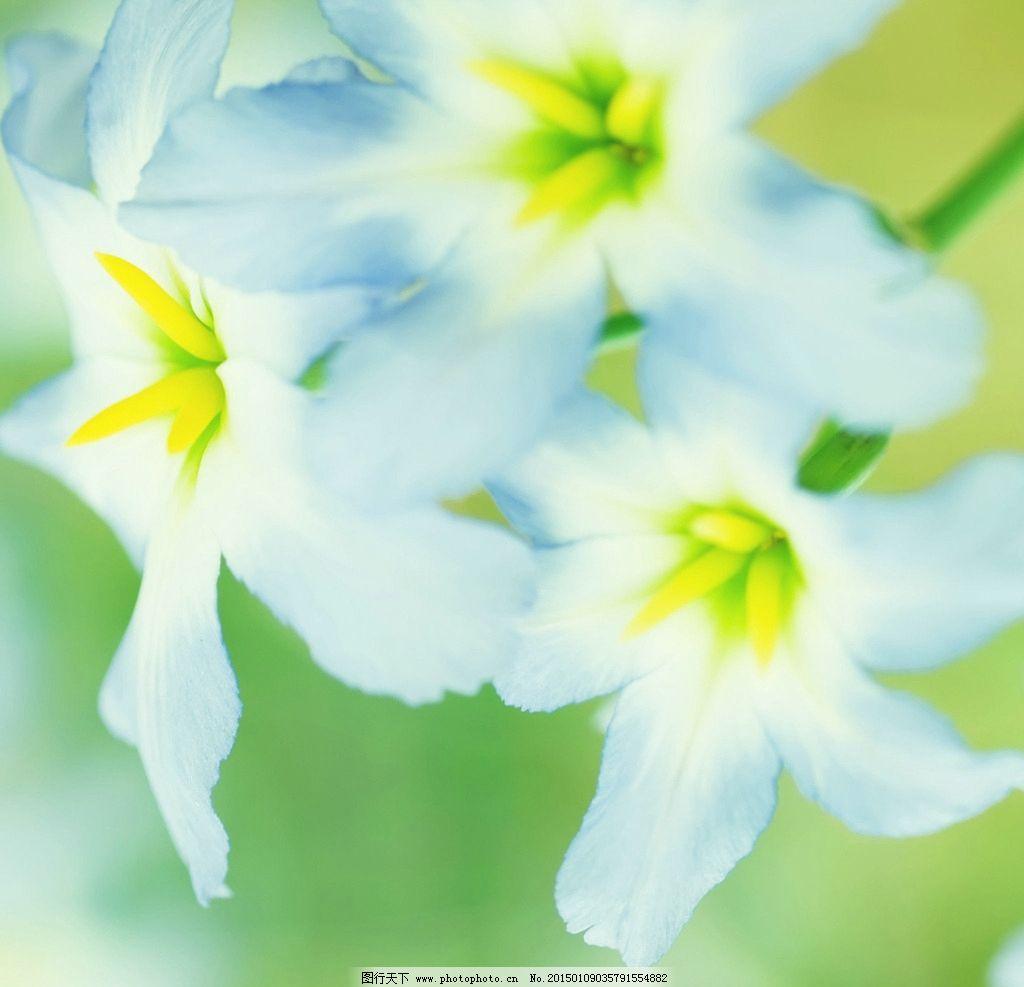 唯美百合花 植物 自然 摄影