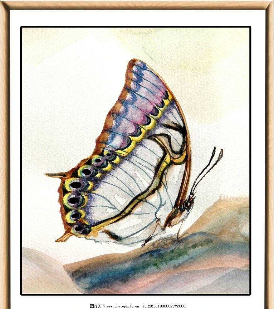 水彩蝴蝶 水彩画 水彩动物 水粉蝴蝶 水粉画