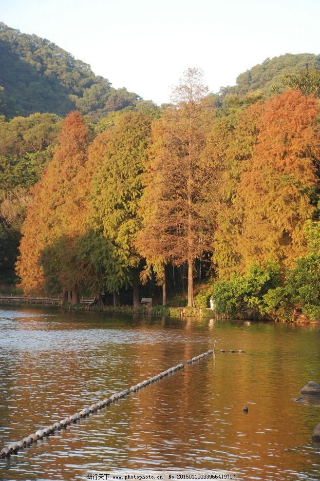 仙湖植物园 红树林 深圳 仙湖 景区 风景名胜 植物园 湖水 树木 摄影