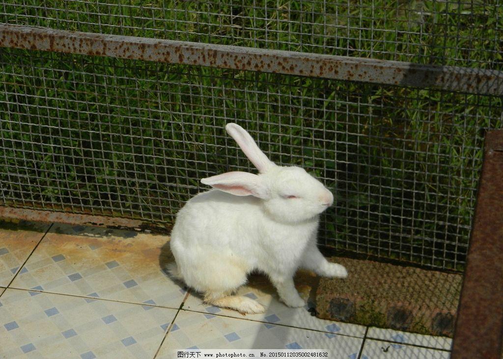 动物园里的小白兔 兔子图片