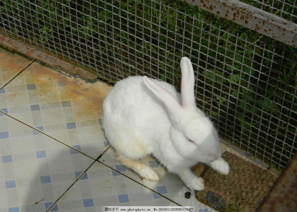 动物园的小白兔 兔子图片