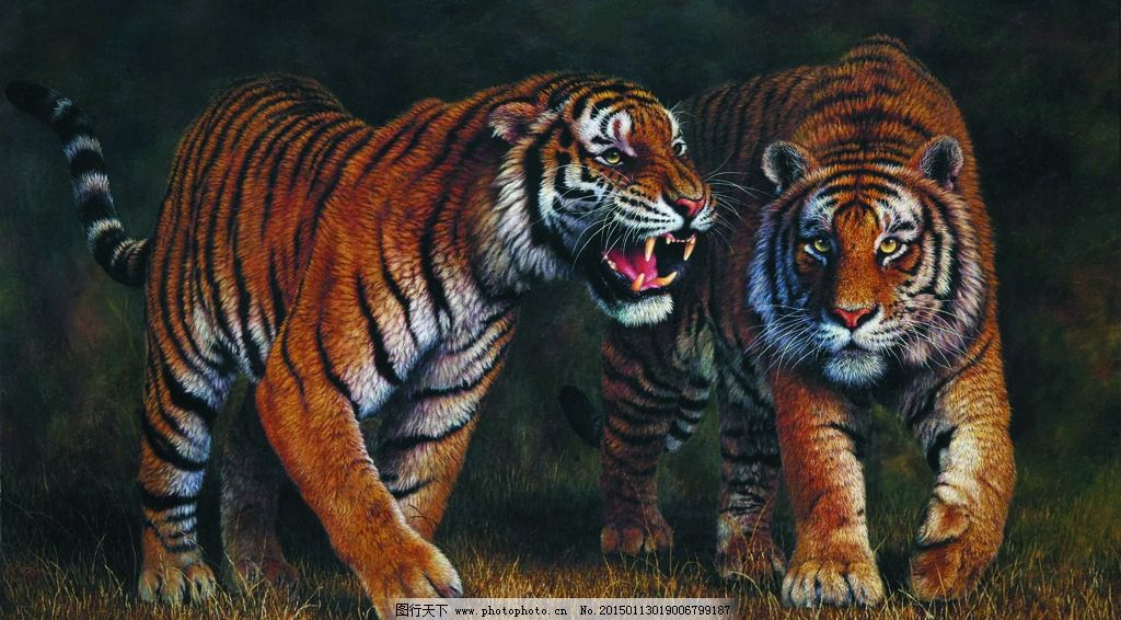 双虎图 美术 油画 动物画 老虎 猛虎 山野