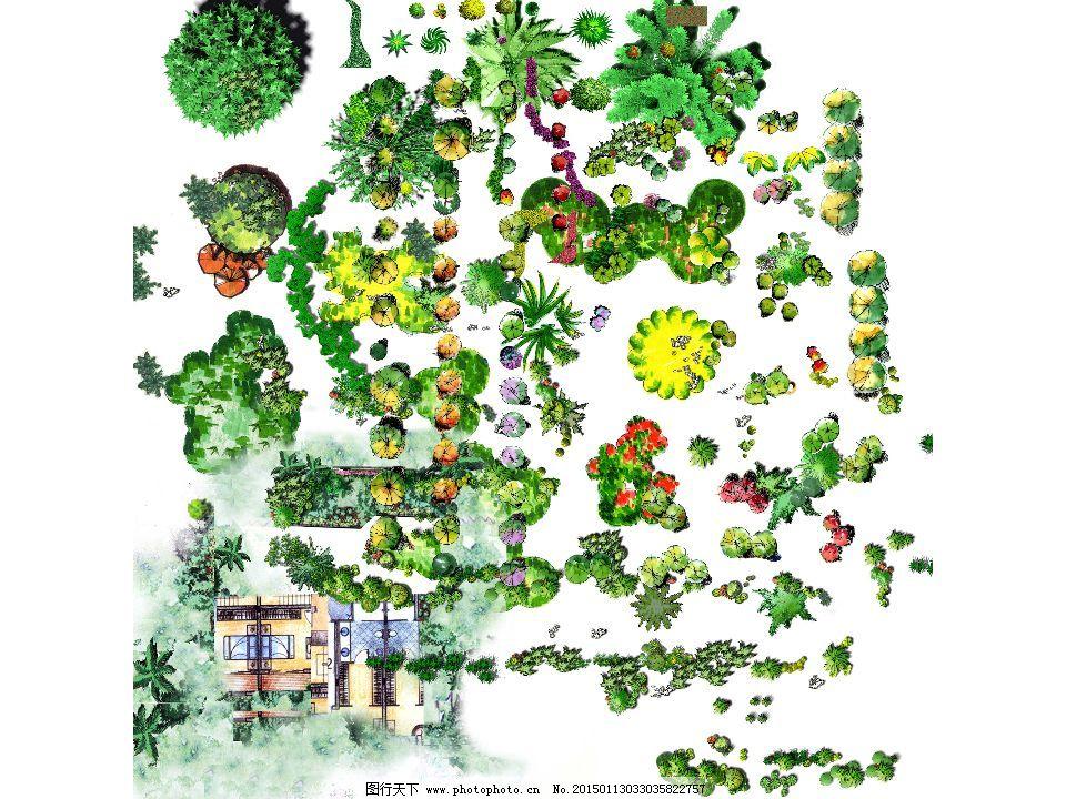 园林手绘植物_其他_psd分层