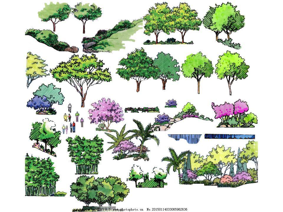 园林手绘 树木花卉