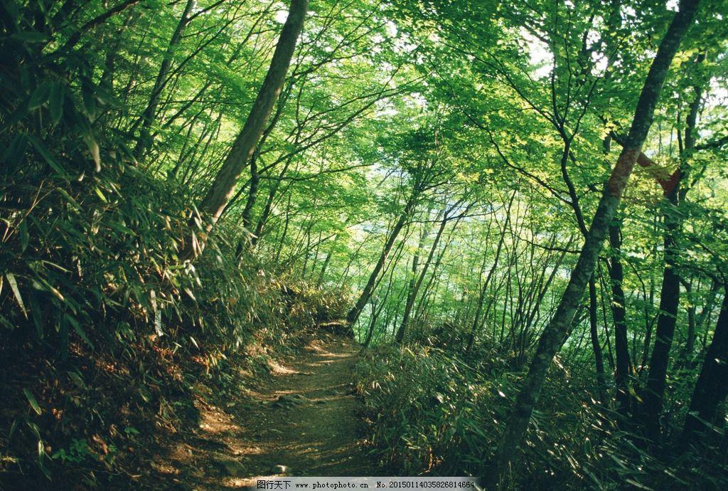 森林 茂盛 植物 原始森林 大自然 树木 绿树 树枝 茂密深林 摄影 生物