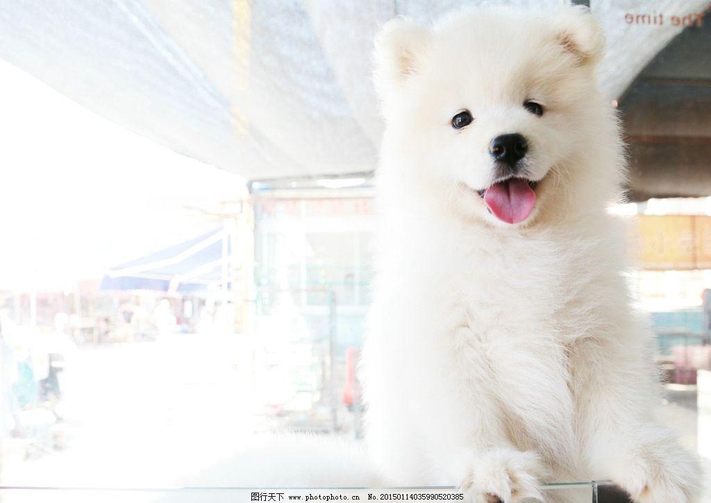 小白熊图片