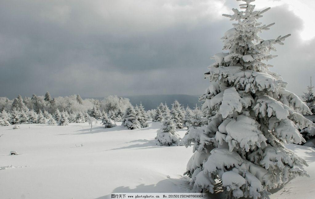山区雪景动物图片