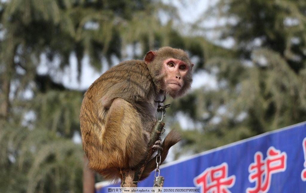 春节庙会图片_野生动物