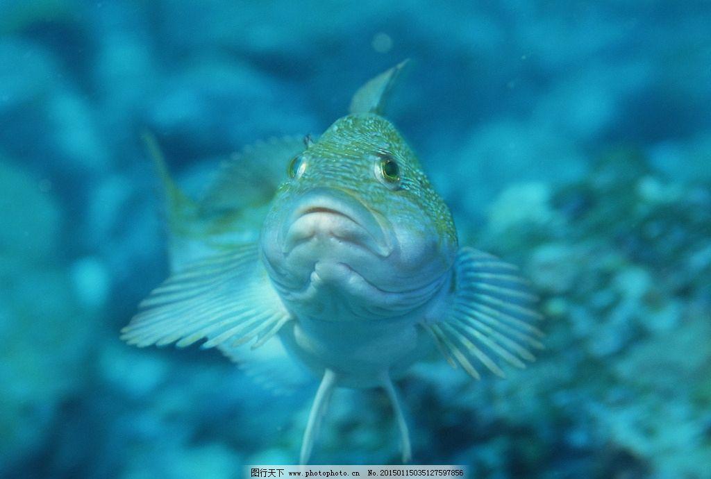 海洋生物 鱼类 海洋世界 热带鱼 珊瑚 35 海洋生物 摄影 生物世界