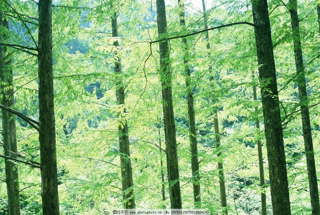 森林 茂盛 植物 原始森林 大自然 树木 绿树 枝叶 茂密深林 摄影 生物