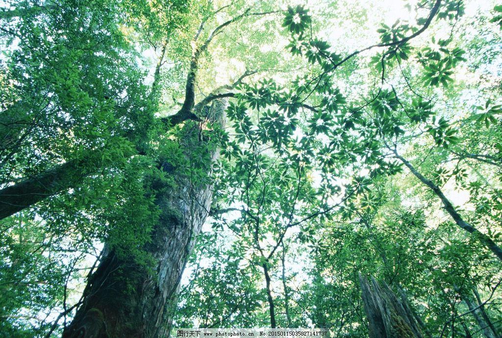 阳光照射 阳光 照射 大树 森林 树林 太阳 光线 景观 枝叶 茂密深林