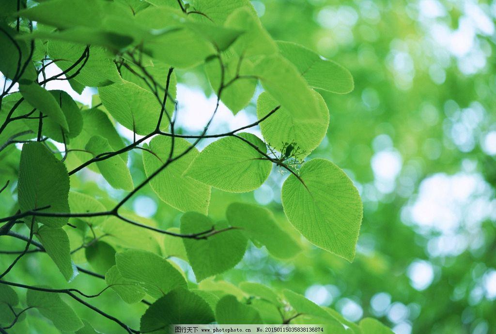 阳光下成长手绘植物