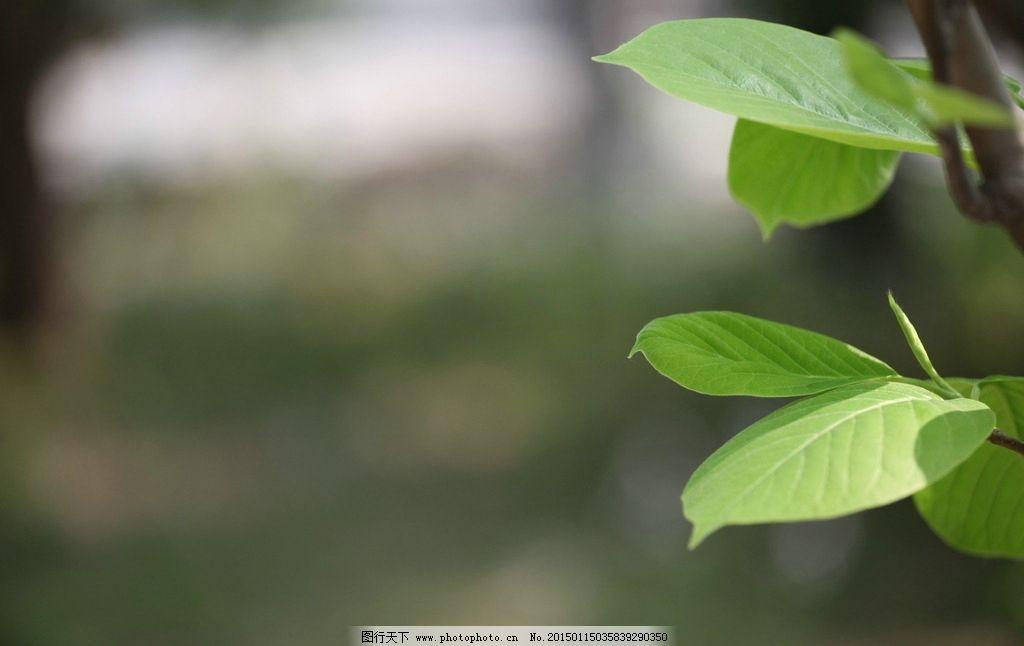 树叶 绿叶 公园 自然 绿色 小清新 木棉叶子 摄影 生物世界 树木树叶