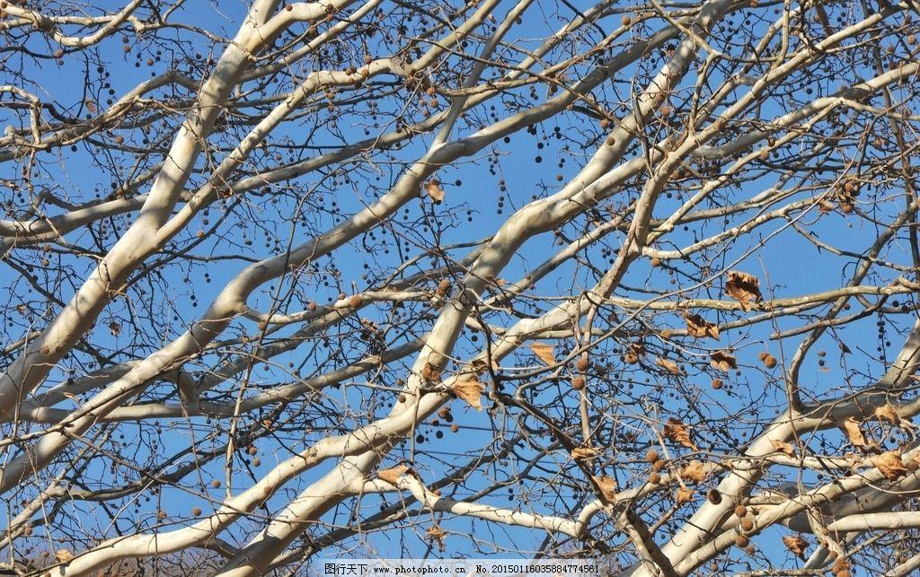 树木 森林 蓝天 大树 树枝 仰望 天空 阳光照射 自然景观 树叶 摄影