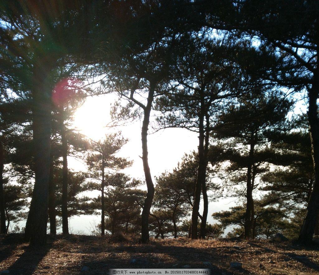 阳光 树林 光圈 霞光 树影 大树 小树 落日 合其客鲜奶吧加盟摄影自然
