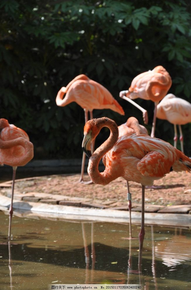 唯美 炫酷 火烈鸟 动物 野生动物 摄影 生物世界 野生动物 300dpi jpg