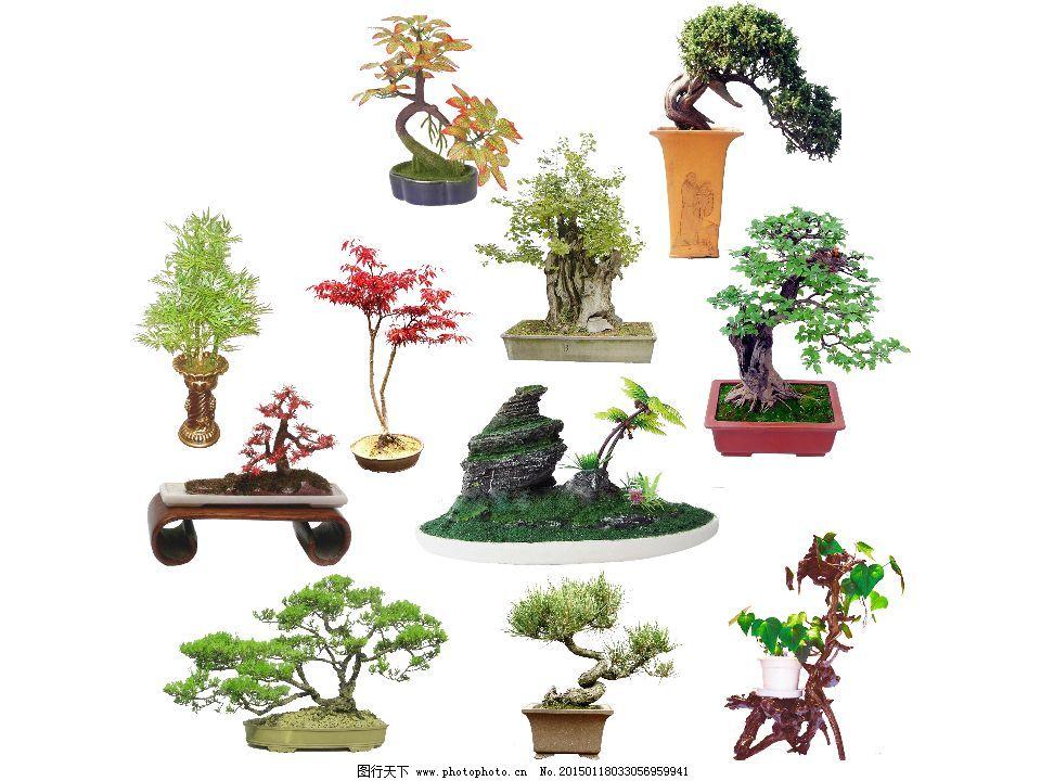 盆栽 手绘植物