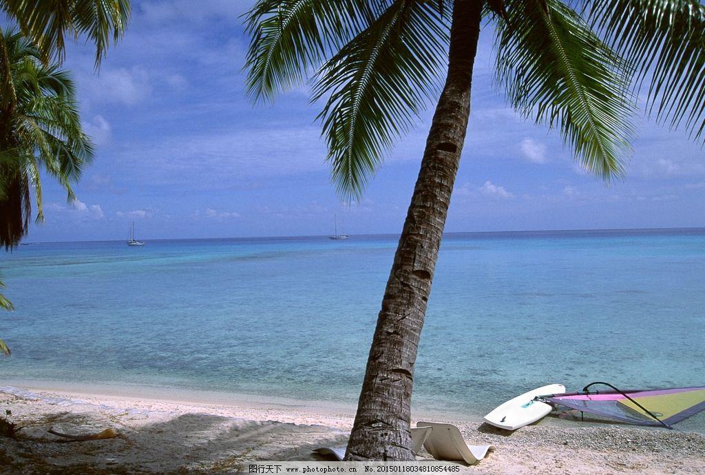 椰子树 椰子 树木 椰树林 树叶 树木树叶 生物世界 大海与小岛 摄影