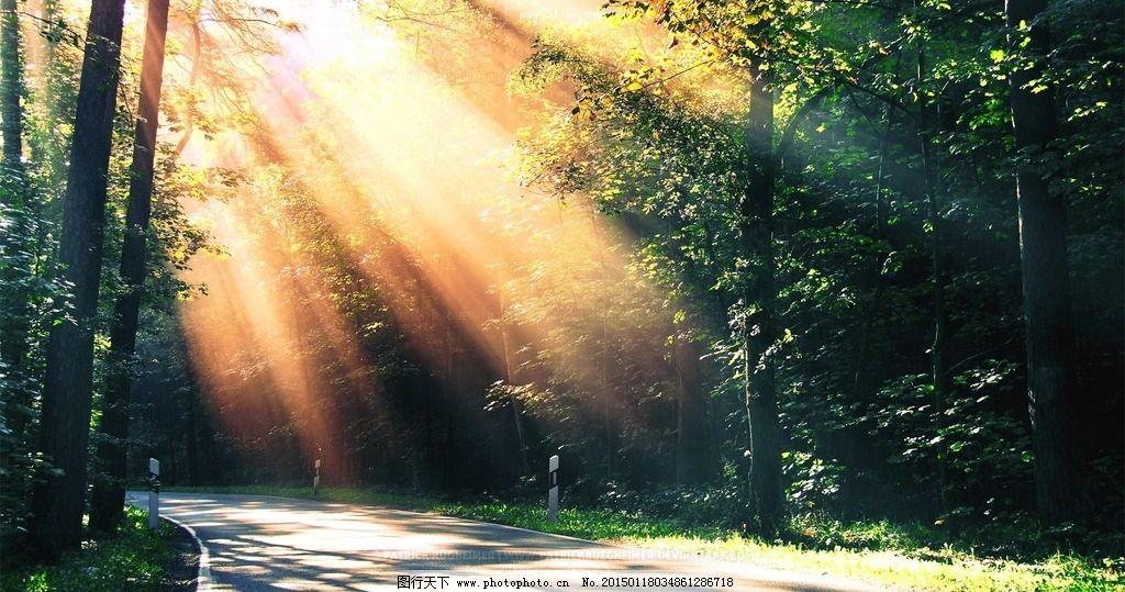 大自然 光 阳光 太阳 树林 森林 树木 唯美 摄影 自然景观 自然风景