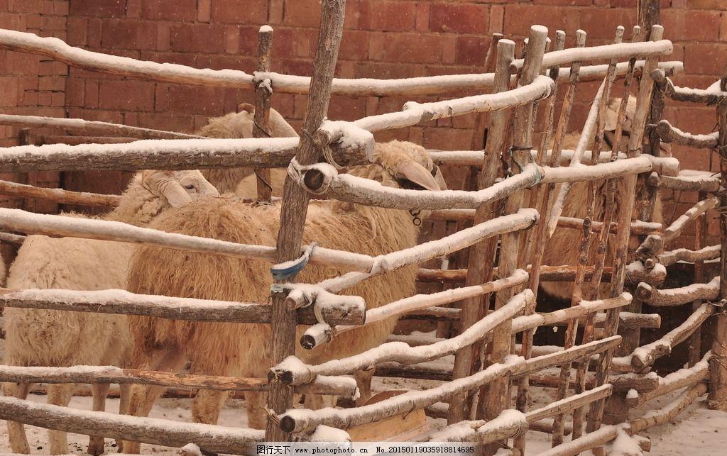栅栏 围栏 羊圈 羊 木栏 摄影 生物世界 家禽家畜 300dpi jpg