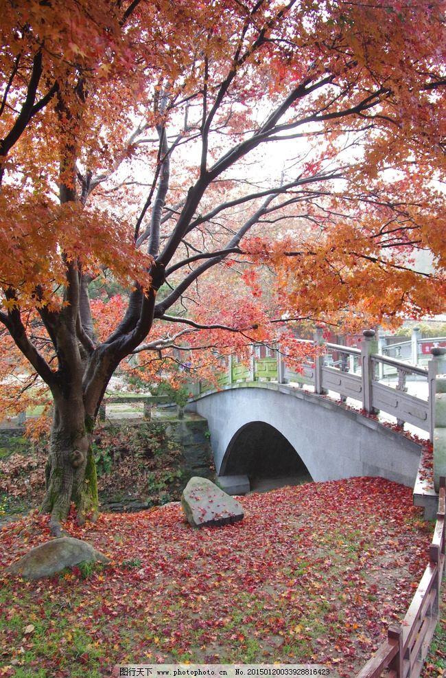 庐山 秋游 秋景 红叶 枫树 落叶秋天 深秋 秋意 小桥 石桥 枫叶 庐山