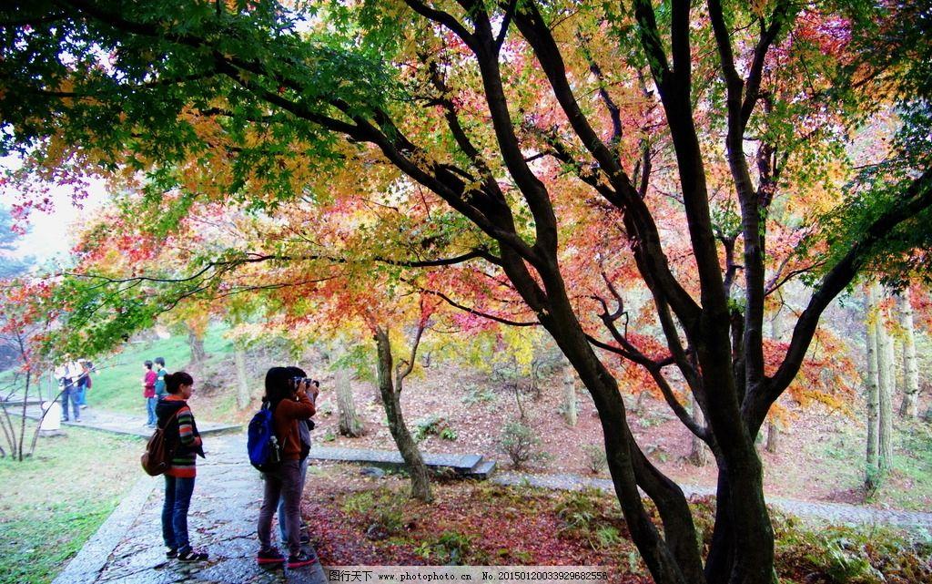 庐山 秋游 秋景 红叶 枫树 落叶秋天 深秋 秋意 庐山 摄影 旅游摄影
