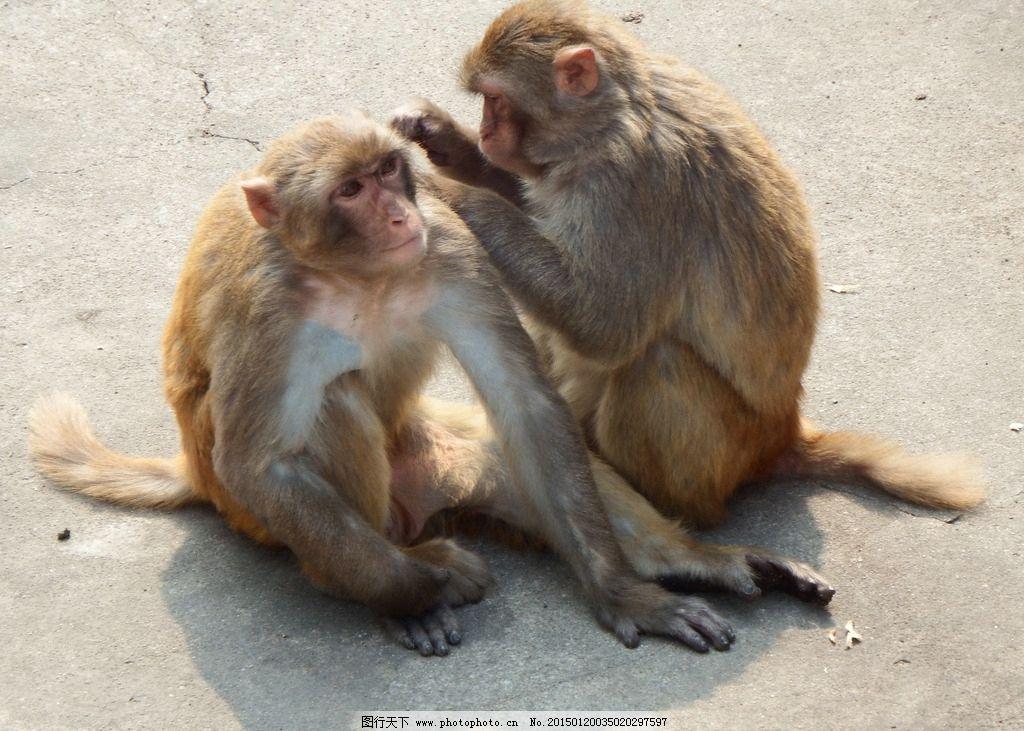 猴 可爱猴子 特写镜头 抓拍 生活 摄影 生物世界 野生动物 72dpi jpg