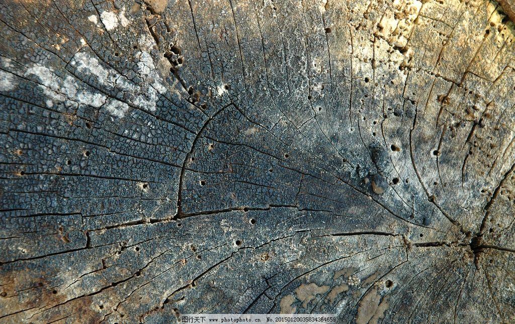 树纹纹路纹理背景图片