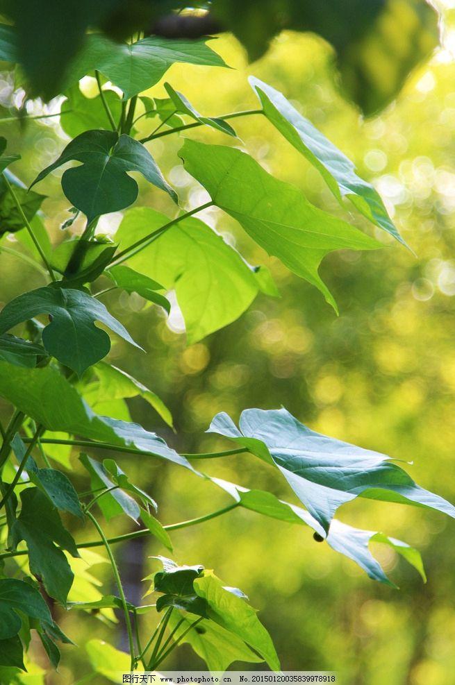 藤蔓 绿叶 树林 阳光 夏天  摄影 生物世界 树木树叶 72dpi jpg