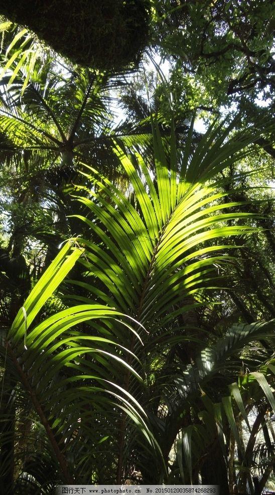 高清热带雨林图片_树木树叶