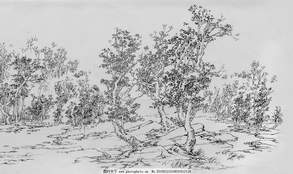 插画 树 风景画 钢笔画