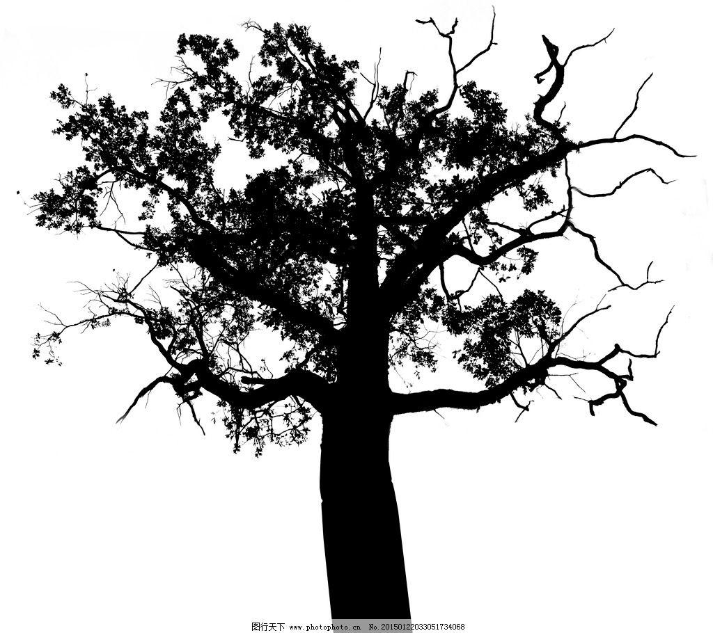 黑白树木 黑白树 黑白画 剪影图片