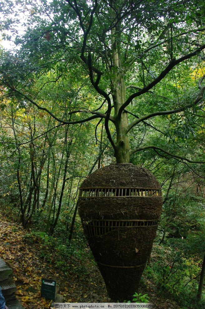 庐山 旅游 大树 植物 保护 巨瓶树 艺术 创意 庐山 摄影 旅游摄影