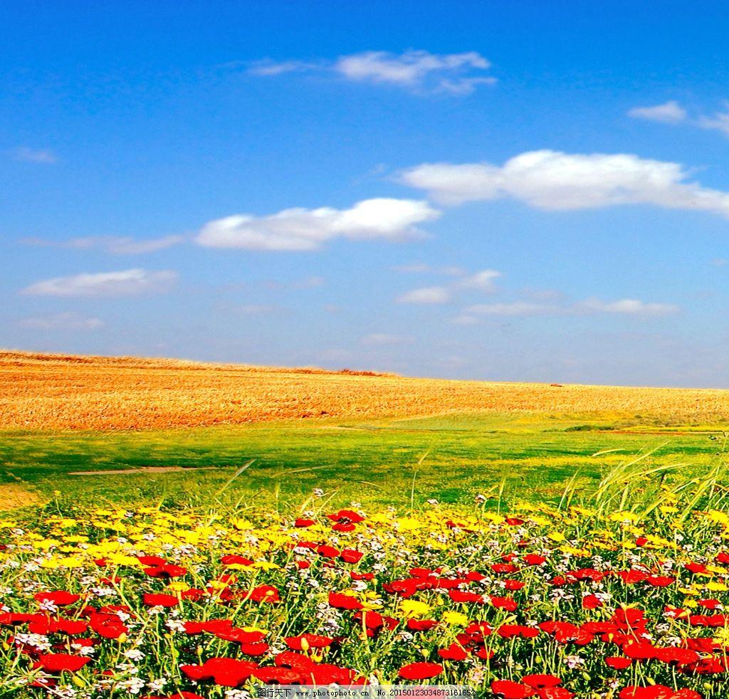 花草风景图片图片