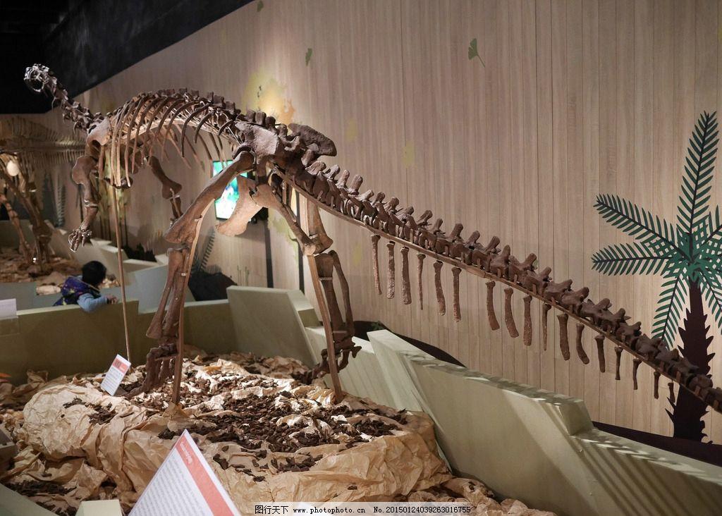 恐龙化石 恐龙 恐龙时代 古生物 化石 远古生物 摄影 文化艺术 其他