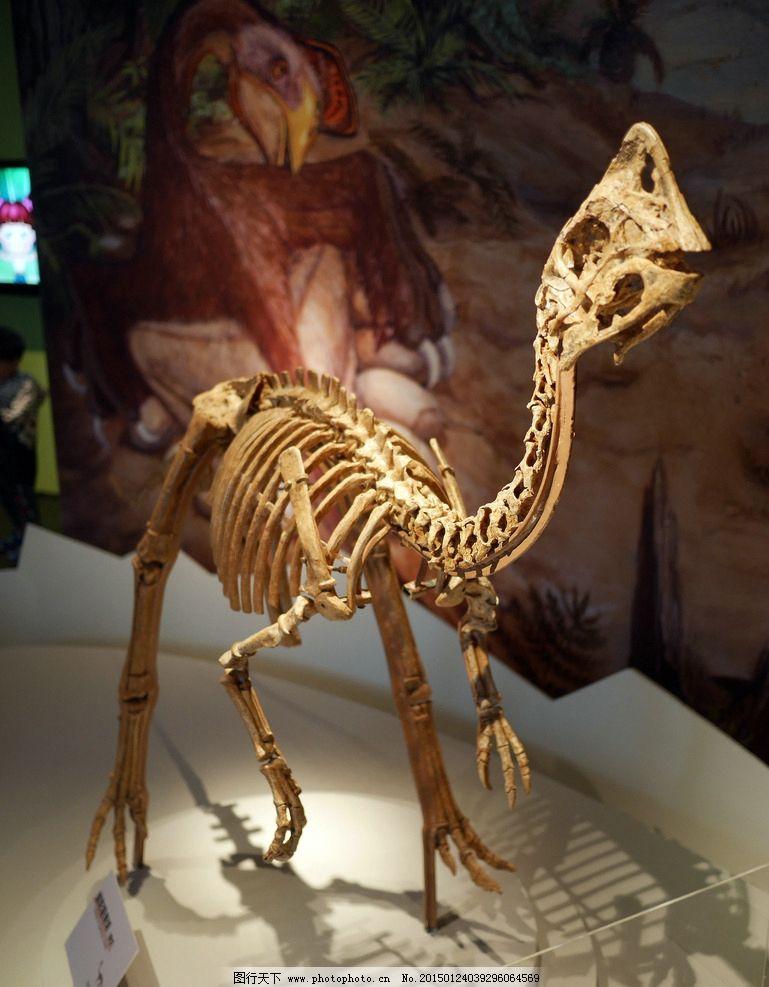 恐龙化石 恐龙 恐龙时代 古生物 化石 远古生物 摄影 文化艺术 其他 1
