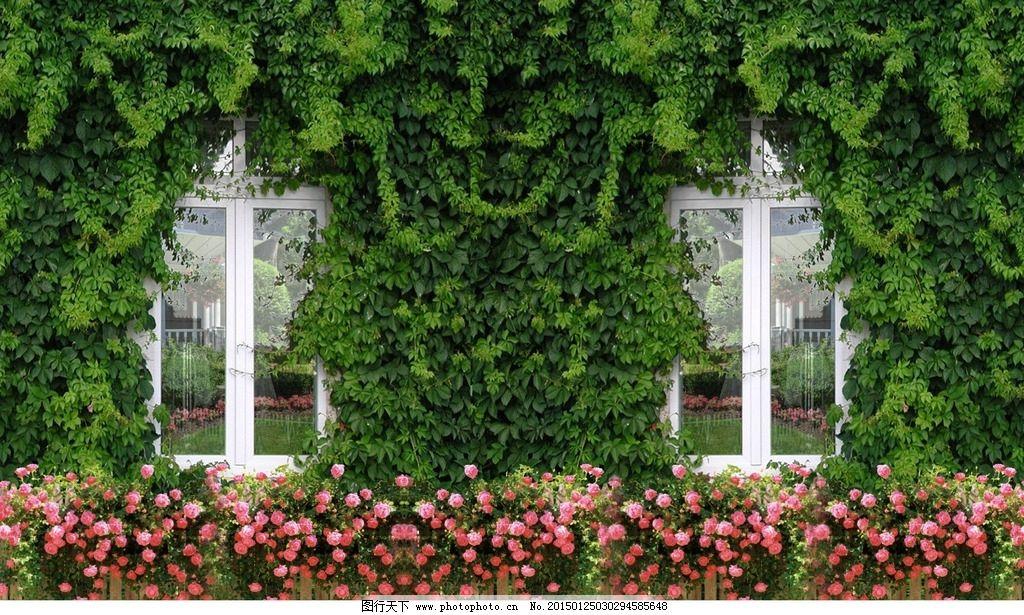 植物 藤蔓 藤条 窗户 欧式窗户