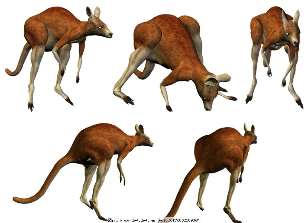 袋鼠素材 3d 有袋动物 动态 澳洲动物 动物 设计 psd分层素材 psd分层
